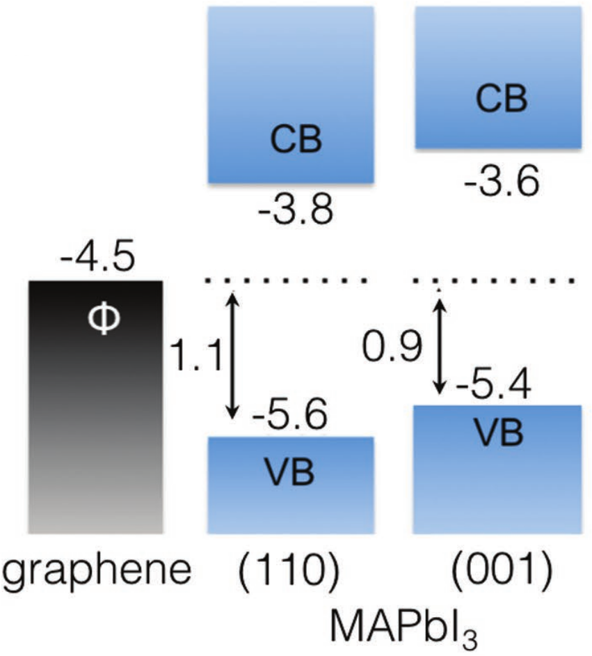 Interfaces between graphene-related materials and MAPbI3: Insights from first-principles